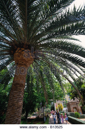 Botanico stock photos botanico stock images alamy - Jardin botanico valencia ...