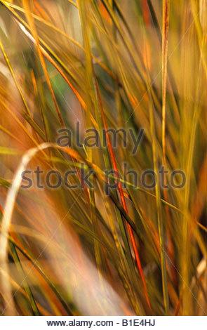 Carex Stock Photos & Carex Stock Images - Page 4 - Alamy