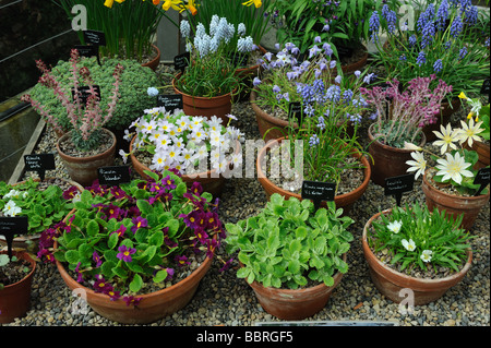 Inspiring Harlow Stock Photos  Harlow Stock Images  Alamy With Excellent A Collection Of Primula Plant Varieties At Harlow Carr Gardens Harrogate   Stock Image With Astounding Garden Suppliers Also Son Bou Garden Apartments In Addition Covent Garden Roh And Garden Cupboard As Well As Hozelock Garden Pump Additionally Garden Lampost From Alamycom With   Excellent Harlow Stock Photos  Harlow Stock Images  Alamy With Astounding A Collection Of Primula Plant Varieties At Harlow Carr Gardens Harrogate   Stock Image And Inspiring Garden Suppliers Also Son Bou Garden Apartments In Addition Covent Garden Roh From Alamycom