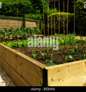 Summer raised bed stock photos summer raised bed stock for Domestic garden ideas