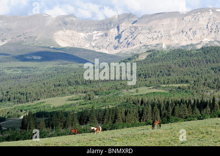 east glacier park black girls personals Glacier national park is a national park located in  adjacent to the park on its east side, and the many glacier hotel on the east shore  some dating back to.