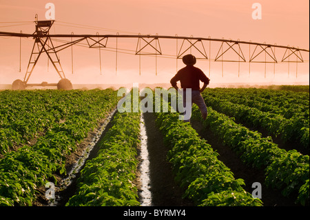 Foods Stock Photos Amp Foods Stock Images Alamy