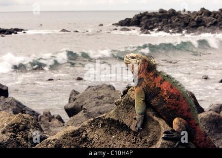 Ceramic Park At Santa Cruz Island Galapagos Islands