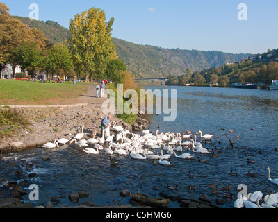 moselle single guys Join us on this moselle  off following the meuse river before skirting luxembourg and arriving in the roman town of trier on the banks of the moselle dating .