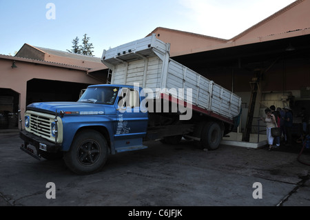 Blue White Lorry Tipping Grapes Into Mechanical Hopper (first Stage Wine  Production) Carmine Granata