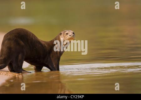 Mammalian Stock Photos...