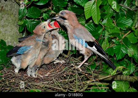 Crows Nest Stock Photos Amp Crows Nest Stock Images Alamy