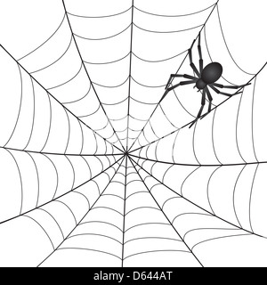 Ethical Issues With Inclusion furthermore 59602395041228366 as well Spider together with Search furthermore 2011 07 Web Skills Clues Aging. on european house spider