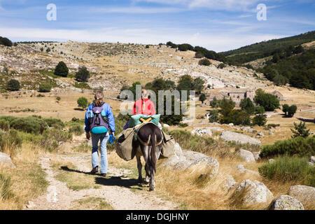 Donkey Stock Photos & Donkey Stock Images - Alamy