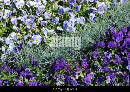 Festuca stock photos festuca stock images page 2 alamy for Gwent garden designs ltd