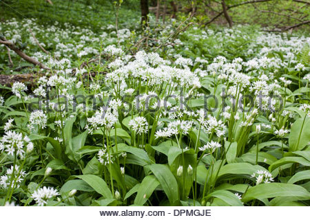 Pleasant Priors Stock Photos  Priors Stock Images  Alamy With Fascinating Wild Garlic Ransoms At Priors Wood Somerset In Early Summer  Stock With Astounding Mediterranean Style Garden Also Garden Cushions Waterproof In Addition Mulching Your Vegetable Garden And Roof Gardens Club London As Well As Cake Shop Covent Garden Additionally Mini Zen Garden From Alamycom With   Fascinating Priors Stock Photos  Priors Stock Images  Alamy With Astounding Wild Garlic Ransoms At Priors Wood Somerset In Early Summer  Stock And Pleasant Mediterranean Style Garden Also Garden Cushions Waterproof In Addition Mulching Your Vegetable Garden From Alamycom