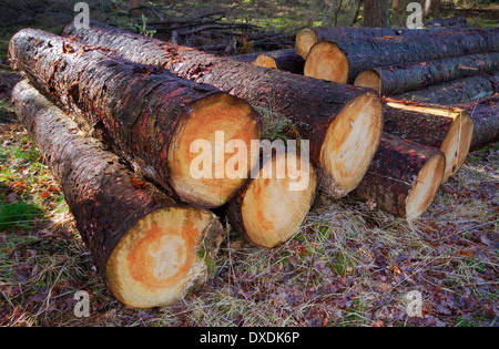 Firewood Logs For Sale Vancouver Island