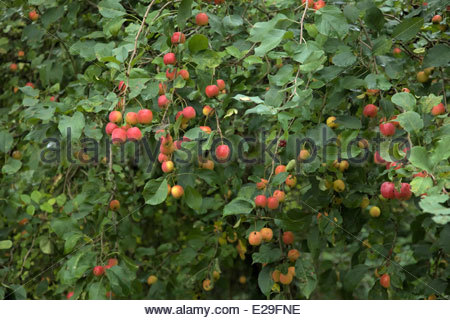 fruit salad with pudding indoor fruit trees