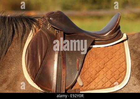 Saddle Stock Photos & Saddle Stock Images