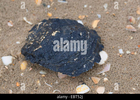 Oyster Stock Photos & Oyster Stock Images - Alamy