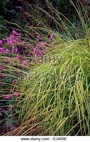 carex stock photos & carex stock images - alamy, Terrassen ideen