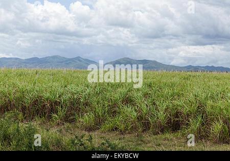 how to grow sugar cane minecraft pe