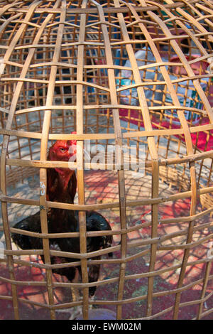 thai varberg cock cage