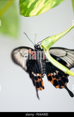 Butterfly Bush Colorado