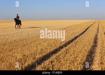 Huftier stock photos huftier stock images alamy for Negative show pool horse racing