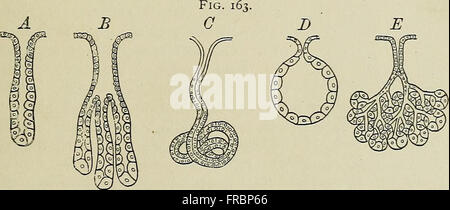 Histology Stock Photos & Histology Stock Images - Alamy