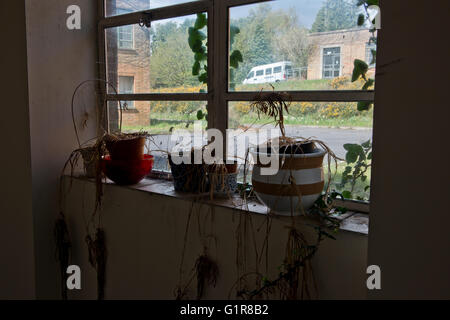 All That Remains Are Dead Houseplants Within Linford Park Nursing Home Hampshire UK