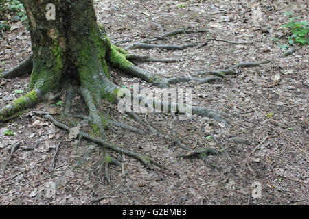 how to stop tree roots from spreading