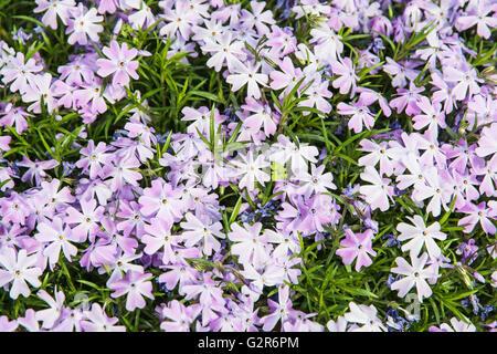 Jade flower carlow