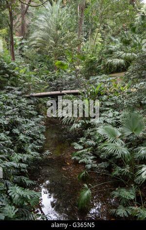 Botanico stock photos botanico stock images alamy for Bodas jardin botanico malaga