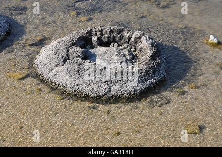 Fossils Stock Photos & Fossils Stock Images - Alamy