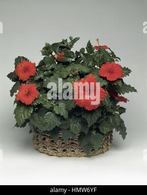 Houseplants Stock Photos Amp Houseplants Stock Images Page