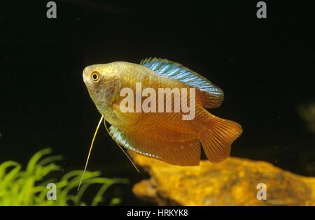 Susswasserfisch Stock Photos  Susswasserfisch Stock Images  Page