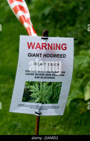 Giant Hogweed Warning Notice On The Grand Union C Towpath Leicestershire Uk Stock