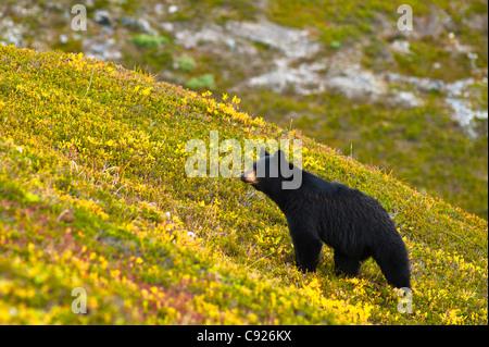 Wildlife stockfotos wildlife bilder seite 2 alamy for Wildparks in der nahe
